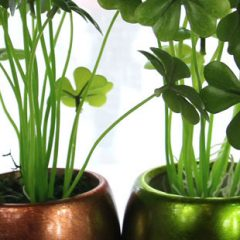 Plantele de interior – elemente de design