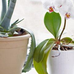 Plante de apartament – cum le alegem